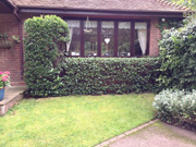 Lawn and hedge